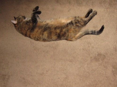 Tuga demonstrates her superior Play Dead skills...