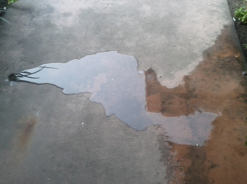 And here is a photo of a puddle shaped like Elvis that has nothing to do with anything.