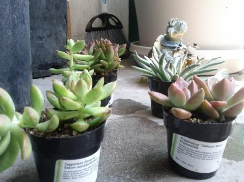 Beware of vicious guard cacti.