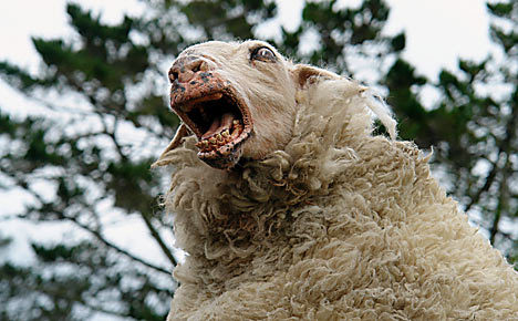 Well, after this dream I'm certainly never going to count sheep ever again.