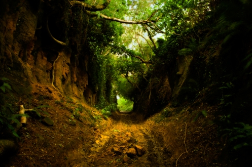 """I was reading about ancient roads called """"holloways"""". Life feels like a holloway right now: well worn and protected, but also difficult to see what's coming."""